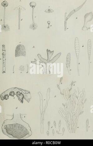 'Annales des Sciences Naturelles Botaniques' (1836) - Stock Photo