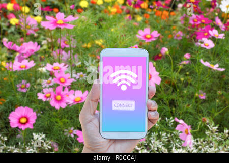 Hand holding smartphone with wifi connect on screen over blurred in cosmos field background - Stock Photo