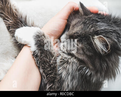 Charming fluffy kitten hugging a woman's hand on a white background. Top view, close-up. Pet care concept - Stock Photo