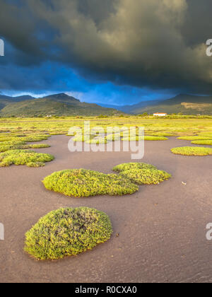 Sunrise over the vegetation salt marsh estuary near Skala Kallonis on Lesbos island, Greece - Stock Photo