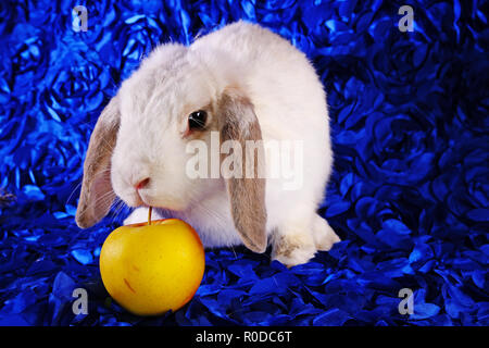 Cute little young bunny rabbit lop eared dwarf rabbits - Stock Photo