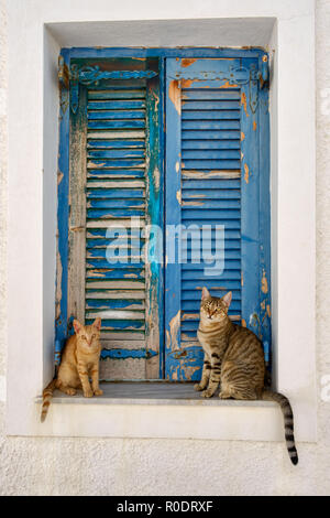 Two cute cats sitting in front of old blue wooden window shutters, Aegean island, Greece - Stock Photo
