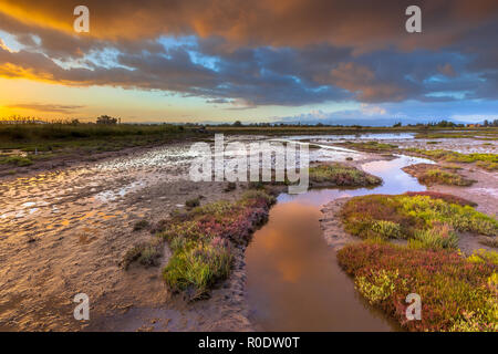Sunrise over the salt tolerant marsh vegetation on an estuary near Skala Kallonis on Lesbos island, Greece - Stock Photo