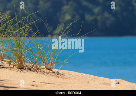 Brightly Colored Grass in a Dune in Abel Tasman National Park, New Zealand - Stock Photo