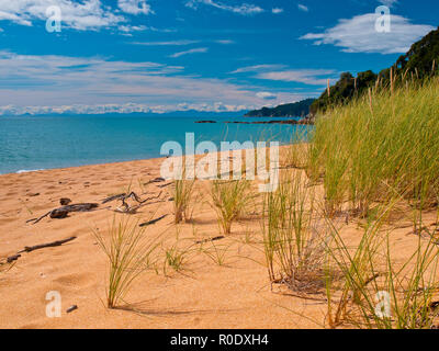 Bright Colored Grass in the Dunes in Abel Tasman National Park, New Zealand - Stock Photo