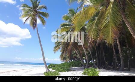 Lonely Beach in the dominican Republic - Saona nature reserve - Parque Nacional del Este - Stock Photo