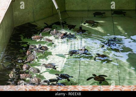 A turtle farm on Gili Meno in Indonesia. - Stock Photo