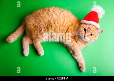 Red cat wears red Santa's hat on green background. Christmas and New year concept - Stock Photo