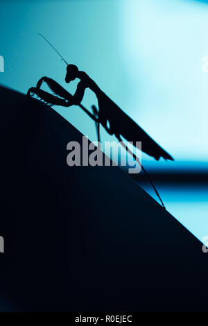 Black silhouette of mantis insect on blurred blue background, macro photo - Stock Photo