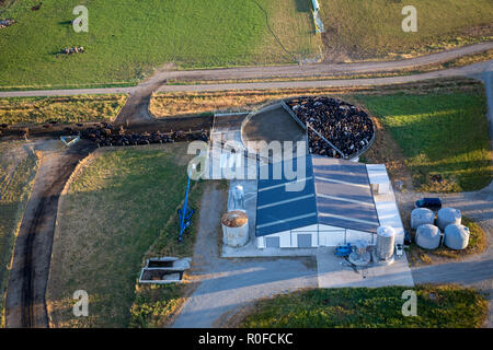 The view from above of a dairy shed and cows penned and waiting to be milked in the early morning, Canterbury, New Zealand - Stock Photo