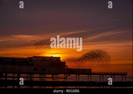 A murmuration of Starlings fly over the pier in Aberystwyth, Ceredigion West Wales. - Stock Photo
