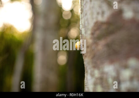 Snail on tree, Forest, Rügen East Germany - Schnecke auf Baumstamm - Stock Photo