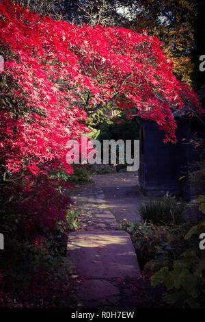Newstead Abbey Japanese Garden On A Mid Autumn Morning. - Stock Photo