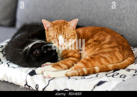 Two cats sleeping and cuddling on the sofa at home. - Stock Photo