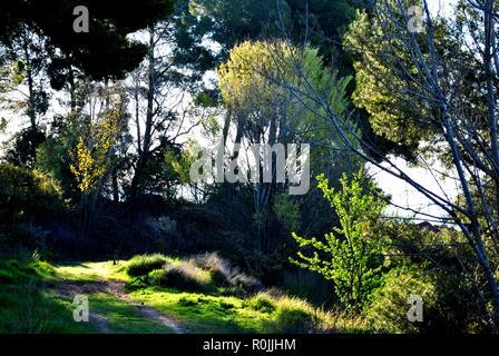 Fresh way, quiet path between mediterranen vegetation in a sunny day. - Stock Photo