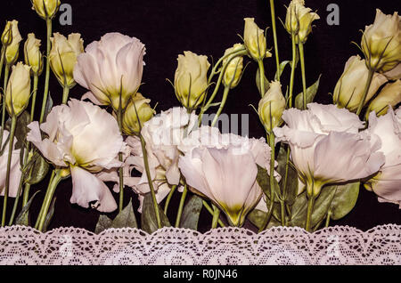Delicate white flowers of Lisianthus with white openwork embroidered border on black plywood - Stock Photo