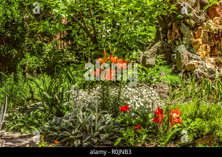 Blooming large orange lilies in the courtyard among the trees and other plants - Stock Photo