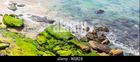 Seagulls on algae covered rocks at the south end of Bondi Beach Sydney NSW Australia. - Stock Photo