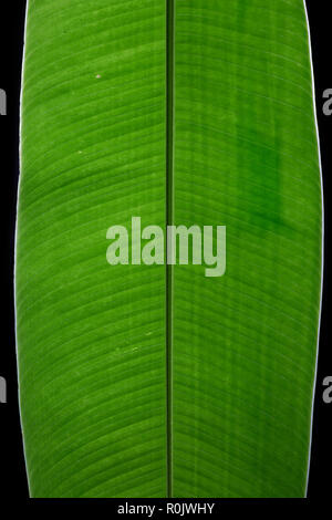 Big Leaf close up with structures green artwork - Stock Photo