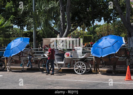 horse drawn carriages on a city street in front of the plaza grande square in merida, mexico.