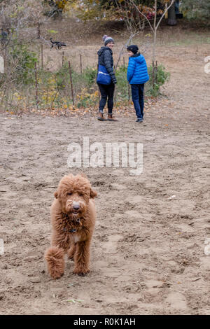 TORONTO, CANADA - NOVEMBER 3, 2018: PEOPLE AND THEIR DOGS AT HIGH PARK DOG PARK. - Stock Photo