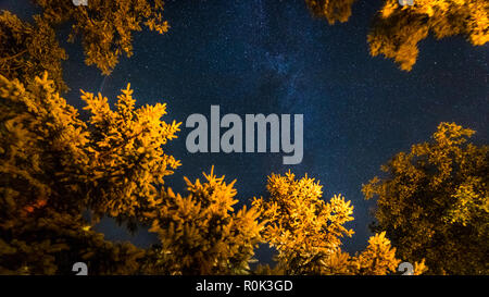 Meteors in the night sky in the forest. Warm light on pine trees and cold night sky, milky way - Stock Photo