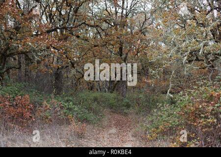 A forest with different colors in autumn, at William Finley Wildlife Refuge near Monroe, OR, USA. - Stock Photo