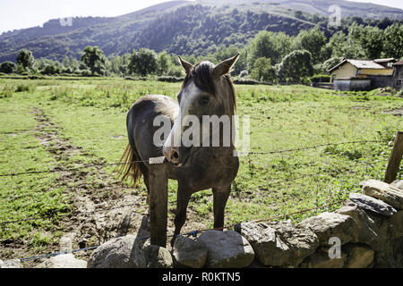 Free horse on the mountain, detail of an animal on the mountain mammal, animal Spanish - Stock Photo