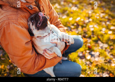 Master holding pug dog in hands in autumn park. Happy puppy looking on man and showing tongue. Hugging pet - Stock Photo