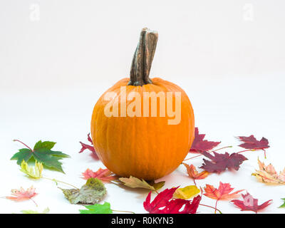 A small orange pumpkin with big stem sitting on a pile of colorful and vibrant maple leaves with orange, green, red and brown colors isolated on white - Stock Photo