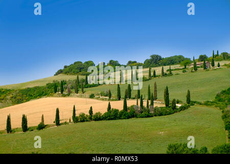 Classic tuscany landscape, wheat fields and cypress trees - Stock Photo