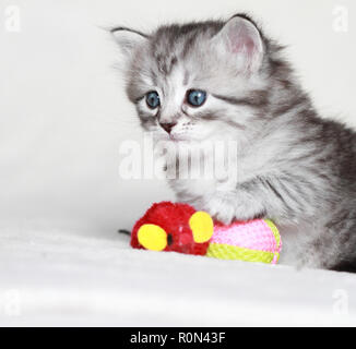 Adorable puppy cat playing in winter time - Stock Photo