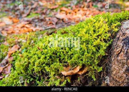Mushroom in bright green moss on stone - Stock Photo