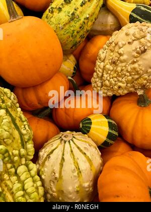 Autumn pumpkins ready for the Fall Halloween season and Thanksgiving piled at a market - Stock Photo