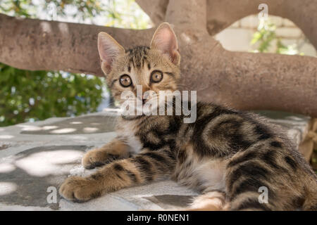 Cute baby kitten, classic brown tabby, resting on a wall, looking with wide eyes, Aegean  island, Greece, Europe - Stock Photo