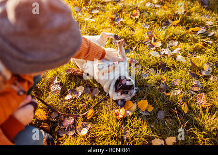 Master playing with pug dog in autumn park. Happy puppy lying on grass by man's legs. Dog having fun