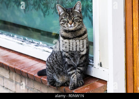 A beautiful cat sitting on a small ledge near the window posing for the camera. - Stock Photo