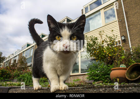 Close up cat on the street taking an interest in the camera. Taking a look from a low perspective at a cat. - Stock Photo