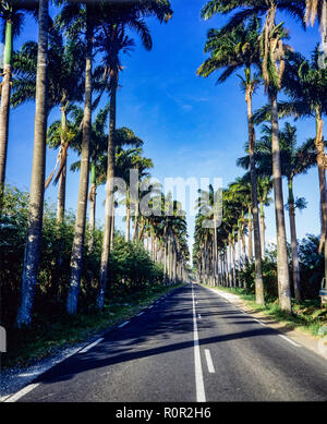 Allée Dumanoir, road lined up with royal palm trees, Guadeloupe, French West Indies, - Stock Photo
