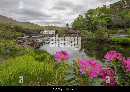 Springtime Ireland - the River Erriff in spring at Aasleagh Falls, County Mayo. - Stock Photo