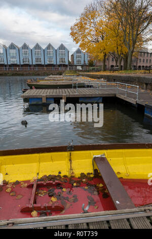 autumn leaves in a boat on the ship canal basin in the city of chichester, west sussex. - Stock Photo
