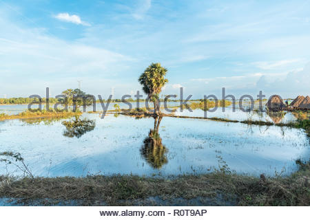 tropical landscape with a palm with reflections in the lake - Stock Photo