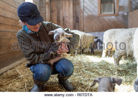 Female farmer holding baby lamb in barn - Stock Photo