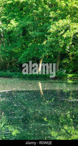 River Reflection - Stock Photo