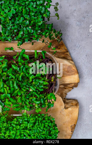 Micro greens sprouts isolated on wooden background. Healthy eating, fresh organic produce and restaurant concept. Top view on watercress, radish, arug