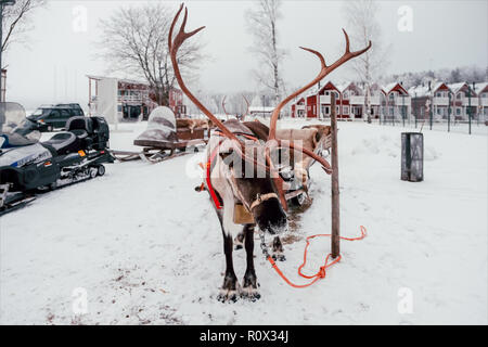 Deer and sledge in Finland - Stock Photo