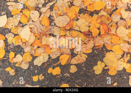 Yellow autumn leaves on asphalt road, top view of fall season background - Stock Photo