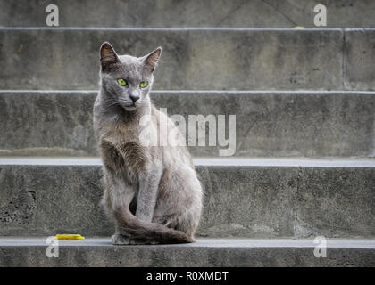 Beautiful gray cat with green eyes sitting on a gray stone staircase - Stock Photo