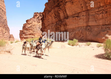 Two bedouins in traditional clothing with five camels dromedary in Wadi Rum desert, Jordan, Middle East - Stock Photo