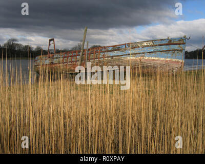 The hulk of the old wooden boat 'Wellspring' among the reed beds on the banks of the River Dee, Kirkcudbright, Dumfries and Galloway, SW Scotland - Stock Photo